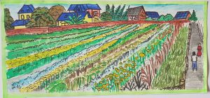"""MY FAMILY'S GARDEN My family has a big garden behind our house. We plant vegetables for our whole family because then we don't have to buy anything from the market. That is good for us and our health because our vegetables are fresh and unsprayed. We plant chili, garlic, onions, tomatoes and water spinach (morning glory). """"Morning glory"""" is called """"phak bong"""" in Lao."""