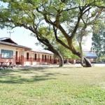 Der begrünte Schulhof